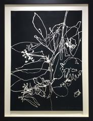 Seismography #22 (Contemporary Abstract Black & White Flower Drawing, Framed)