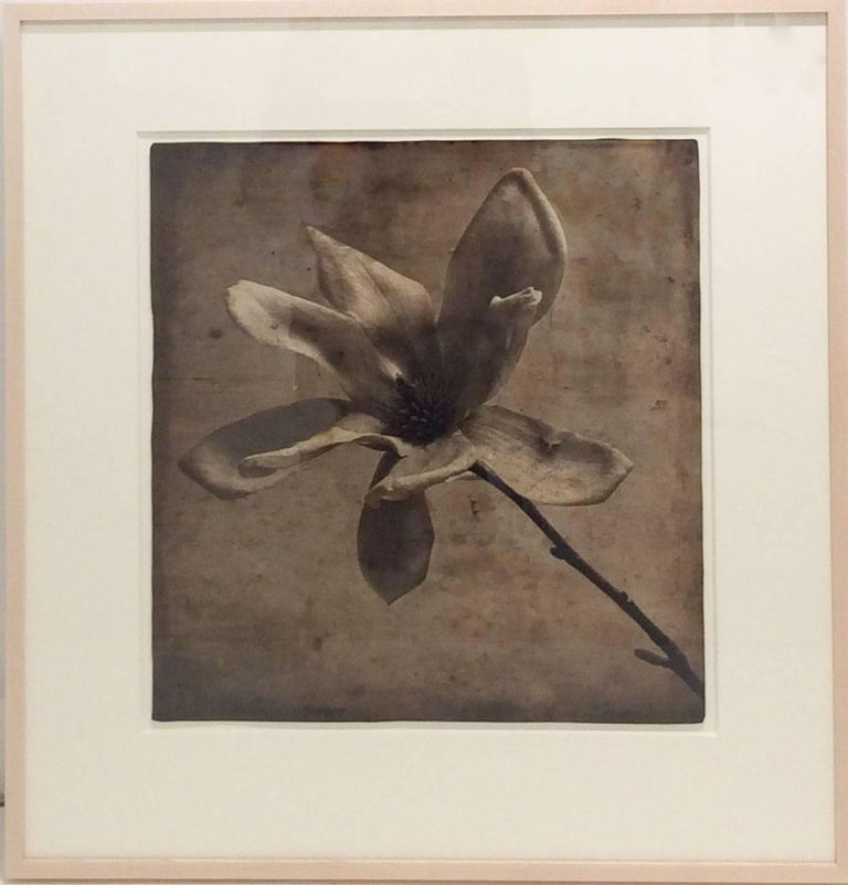 Gray Magnolia (Elegant Sepia Toned Photograph with Mixed Media of Single Flower) - Brown Black and White Photograph by David Seiler