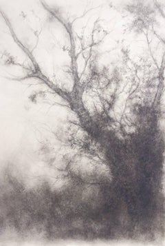 Tree Study (Black and White Charcoal Landscape Drawing on Paper)