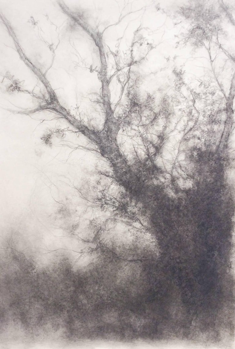 Tree study black and white charcoal landscape drawing on paper