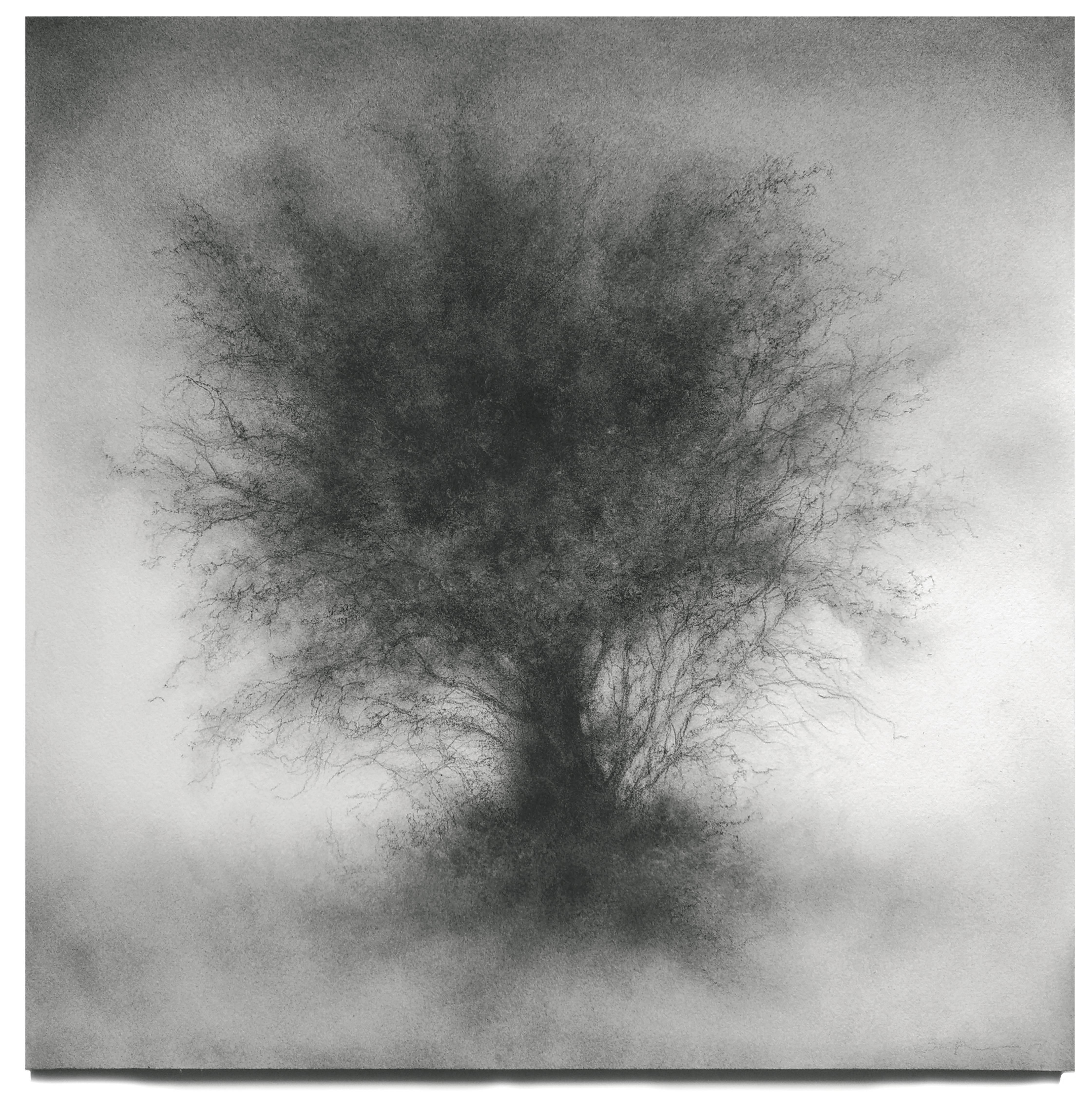 Whippersnapper (Realistic Charcoal Landscape Drawing on Panel of a Large Tree)