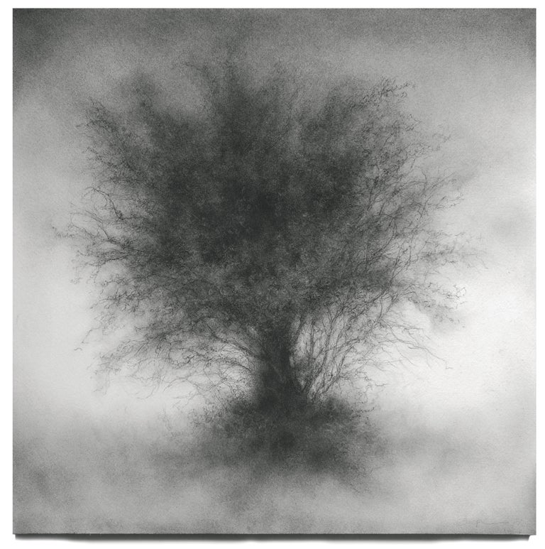 Whippersnapper (Realistic Charcoal Landscape Drawing on Panel of a Large Tree) by Sue Bryan  Contemporary, detailed black and white charcoal landscape and still life drawing of a large tree Charcoal and carbon on Arches on wood panel 16 x 16 inches,