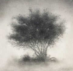 Little Scrap: Realistic Black & White Charcoal Drawing on Paper of a Single Tree