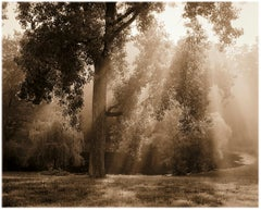 Tree and Pond, Ghent (Sepia Toned Pigment Print of a Sunlit Landscape)