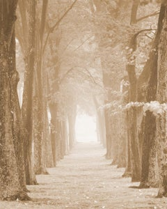 Allee, Tuxedo Park (Sepia Toned Pigment Print of Trees Along a Sunlit Path)