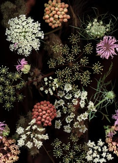 Milkweed Prairie Still Life (Modern Digital Flower Still Life Photograph)