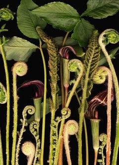 Woodland Night (Modern Still Life Photograph, Green Plants on Black, Framed)
