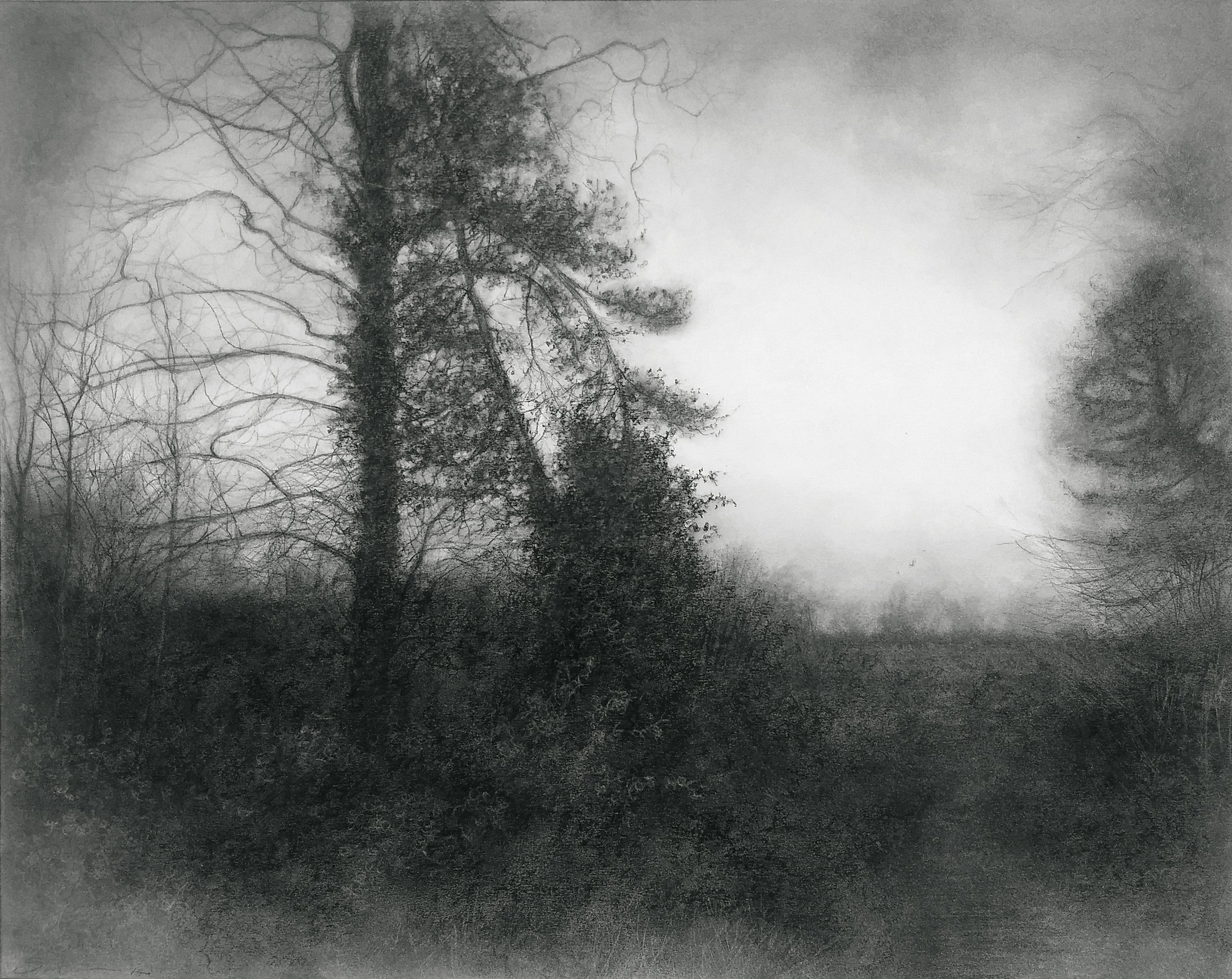 A way through black white charcoal drawing of misty landscape w spruce tree