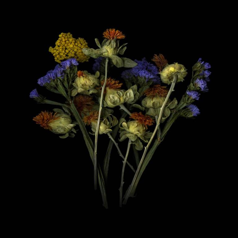 Jerry Freedner - Dried Flowers (Floral Still Life Photograph of ...