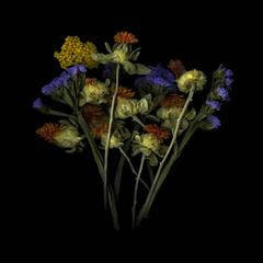 Jerry Freedner - Dried Flowers (Floral Still Life Photograph of Purple, Red, & Yellow Flowers)