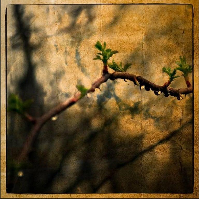 Jerry Freedner Landscape Photograph - Thorns