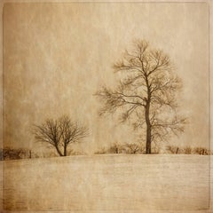 Winter Farm Fields (Vintage Style Sepia Toned Landscape Photograph of Trees)