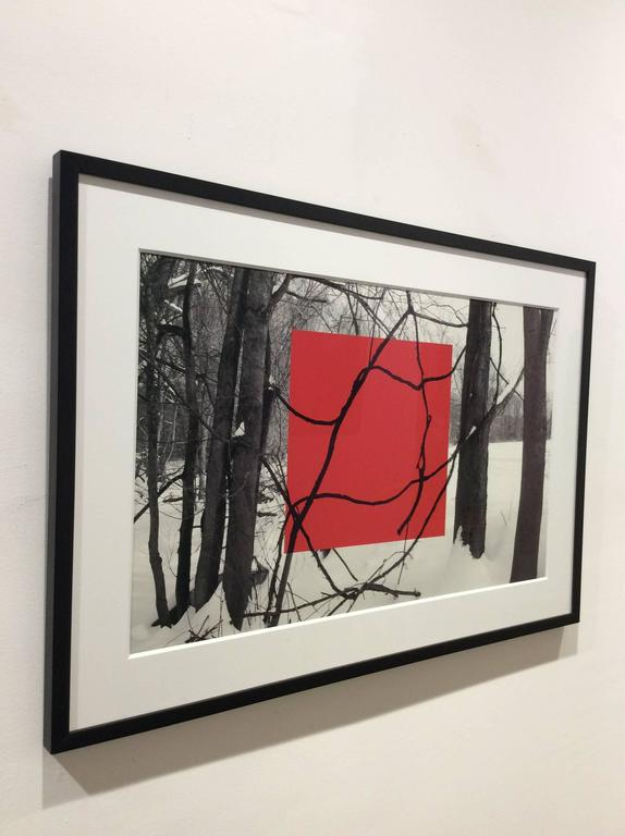 Red Square (Modern Abstract B&W Gestural Tree Outlines with Graphic Red Square) - Contemporary Photograph by Stephanie Blumenthal