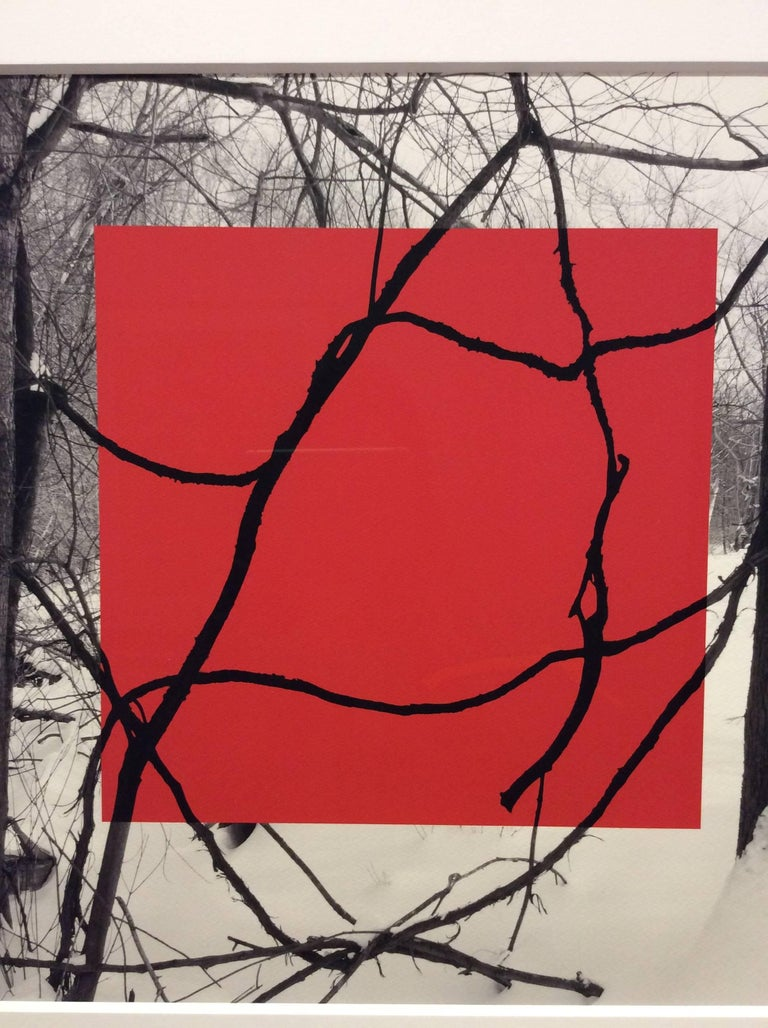Red Square (Modern Abstract B&W Gestural Tree Outlines with Graphic Red Square) - Gray Landscape Photograph by Stephanie Blumenthal