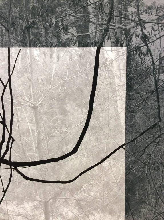 Blue Black (Contemporary Landscape Photo with Lyrical Vines and Geometric Shape) For Sale 1