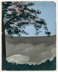 Dombeya Tree #1