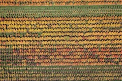 Tree carpet - Aerial color photography