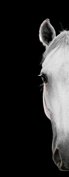 Horse Portrait 34 - black and white photography