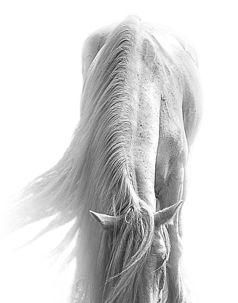 Bob Tabor Black and White Photograph - Horse 98