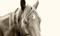 Horse 31 - black and white photography