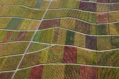 Field carpet