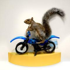 #thesquirrels (Squirrel on a Glass Motorcycle)