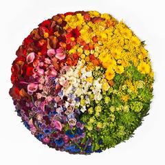 Colour Pixels