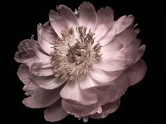 Photograph - Flower series (16x22)