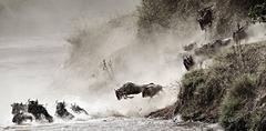 Award winning Wildlife art photo - Wildebeest Migration, Courage (Kenya)