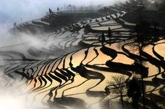 China landscapes - Paddy Field at Dawn