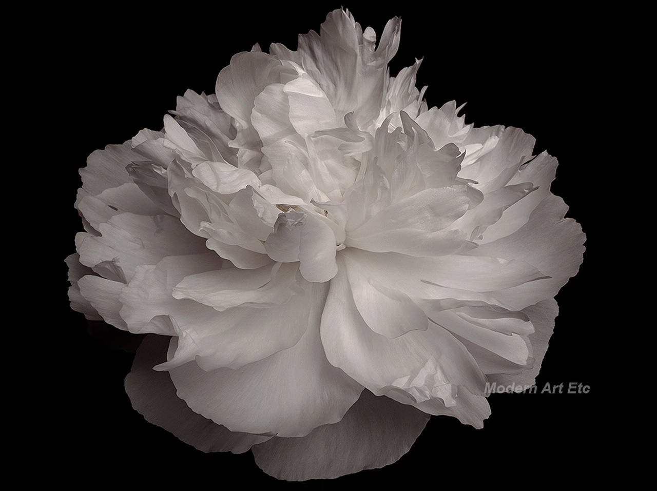 Mv Photography Large Scale Abstract Black And White Flower