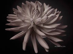 Photography - Flower Series