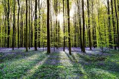 Large landscape photography - ready for installation - lush forest spring dawn
