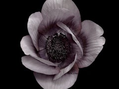 Photography - Flower Series (30 x 40 image)