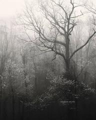 Photograph - Mountains Forest Spring in Season - landscapes, nature