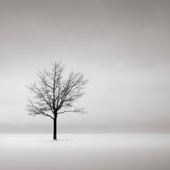 Photograph - black and white photo Solitary  (Solitude, Nature, Trees)