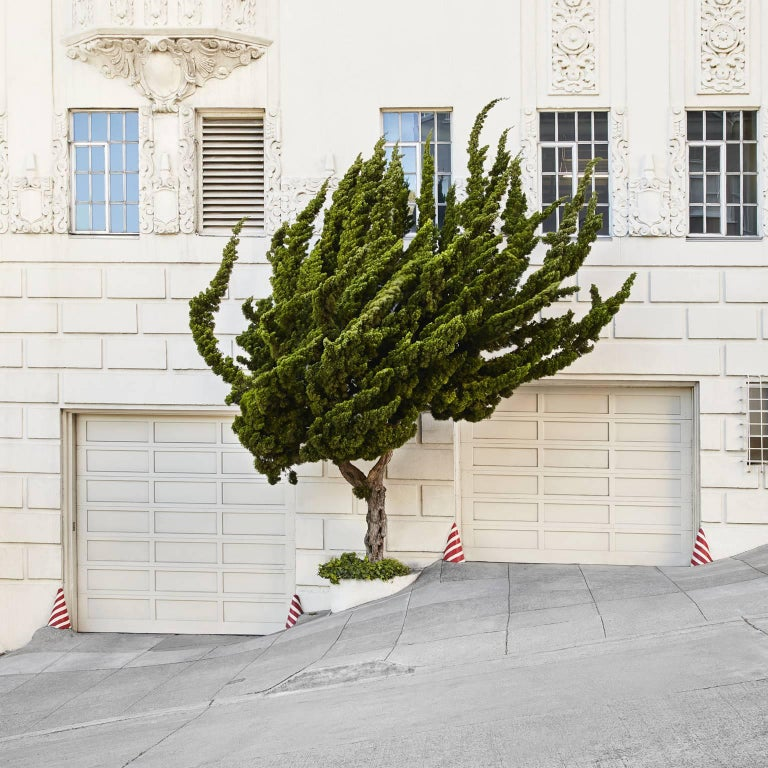 Topiary I by Frank Schott    from a series of photographic observances capturing the antics of urban gardening and striking art of topiaries' green minimalism  40 x 40 inches (102 x 102cm) edition of 25 signed  48 x 48 inches (122 x 122cm) edition