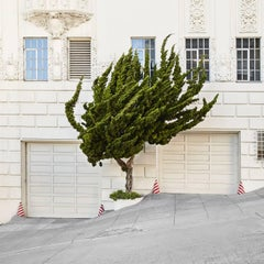 Topiary I - large format photograph of ornamental shaped tree