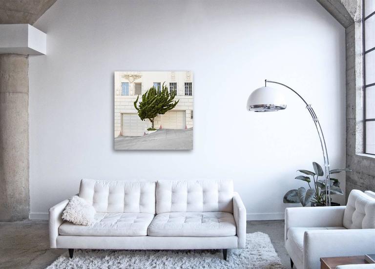 Topiary I ( 40 x 40