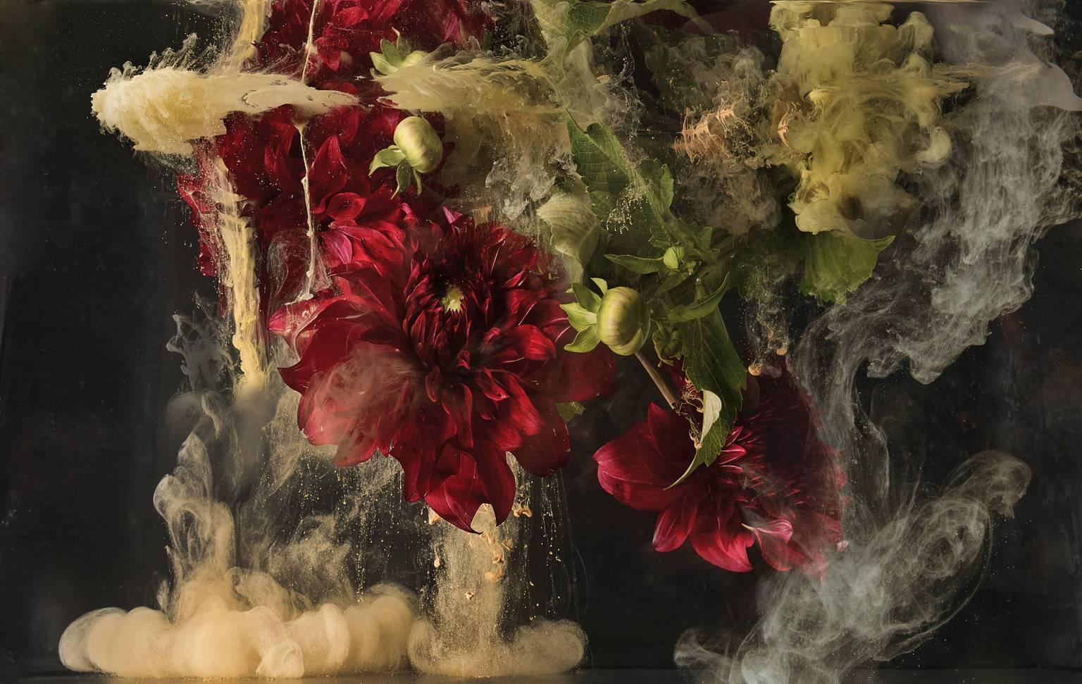 Flora I - large format photograph of abstract botanical liquid cloud explosion