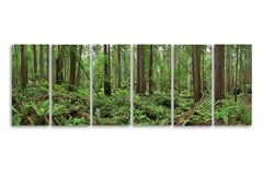 Redwoods - large format nature forest panorama in six individual glass panels