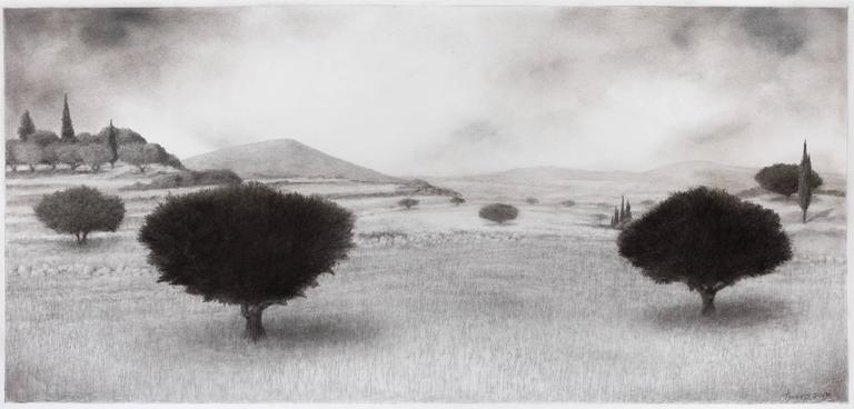 Olive Grove with Hills in the Distance