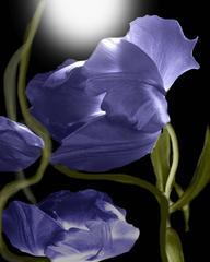 Flower Ghosts 1 - 2