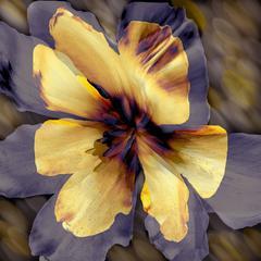 Flower Ghosts 2 - 4