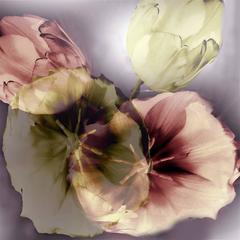 Flower Ghosts 3 - 2
