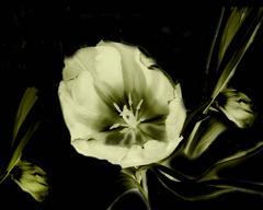 Flower Ghosts 4