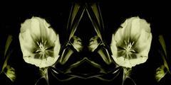 Flower Ghosts 4 - 2
