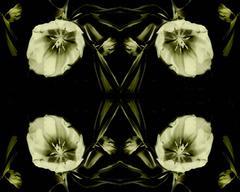 Flower Ghosts 4 - 3