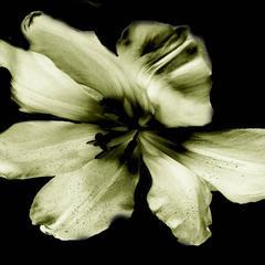Flower Ghosts 5