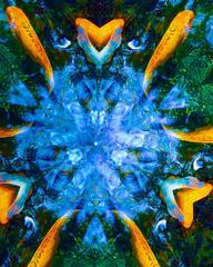 Blue Energy Field